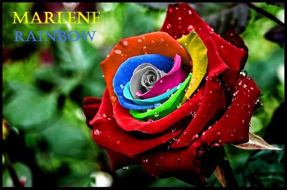 Marlene Rainbow