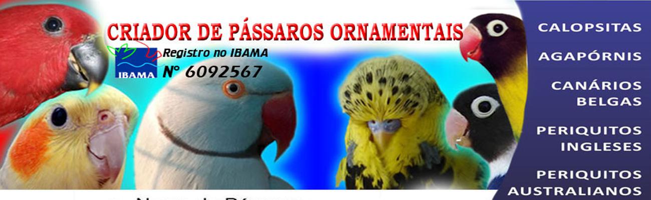 CRIADOR DE PÁSSARO ORNAMENTAL
