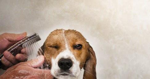 Cesar millan italia come fare il bagno con successo al vostro cane - Come fare il bagno al cane ...