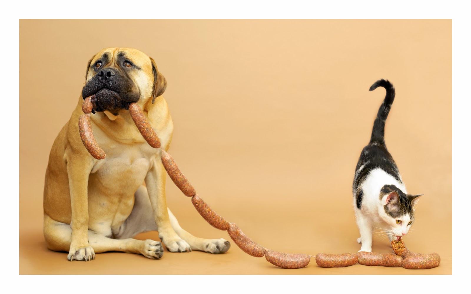 """El perro: """"¡ ayuda!"""""""
