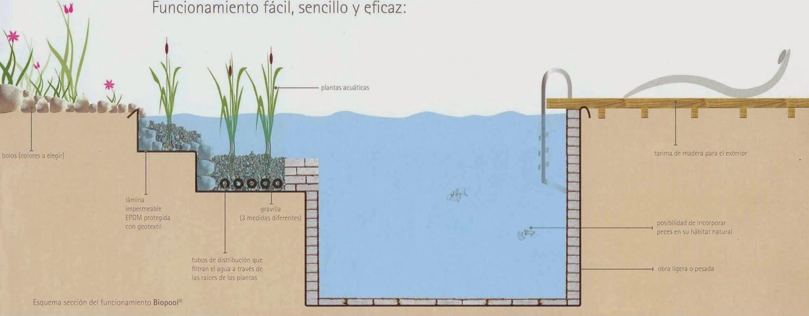 Te invito a leer piscinas naturales for Como hacer una laguna artificial