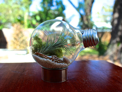 air plants tiny terrarium