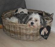 Bobbie en Gizmo