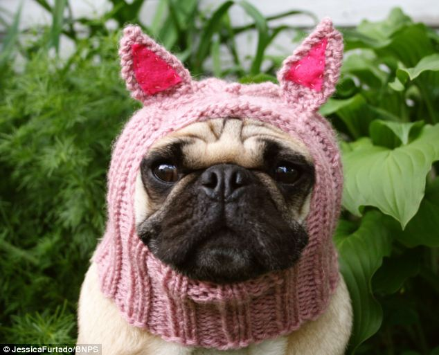 Knitting Pattern For Pug Hat : The Knitting Needle and the Damage Done: Miss Havishams Nightgown and Ot...