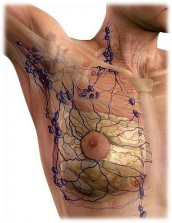 Terapia alternativa para adenoma fibroso de mama