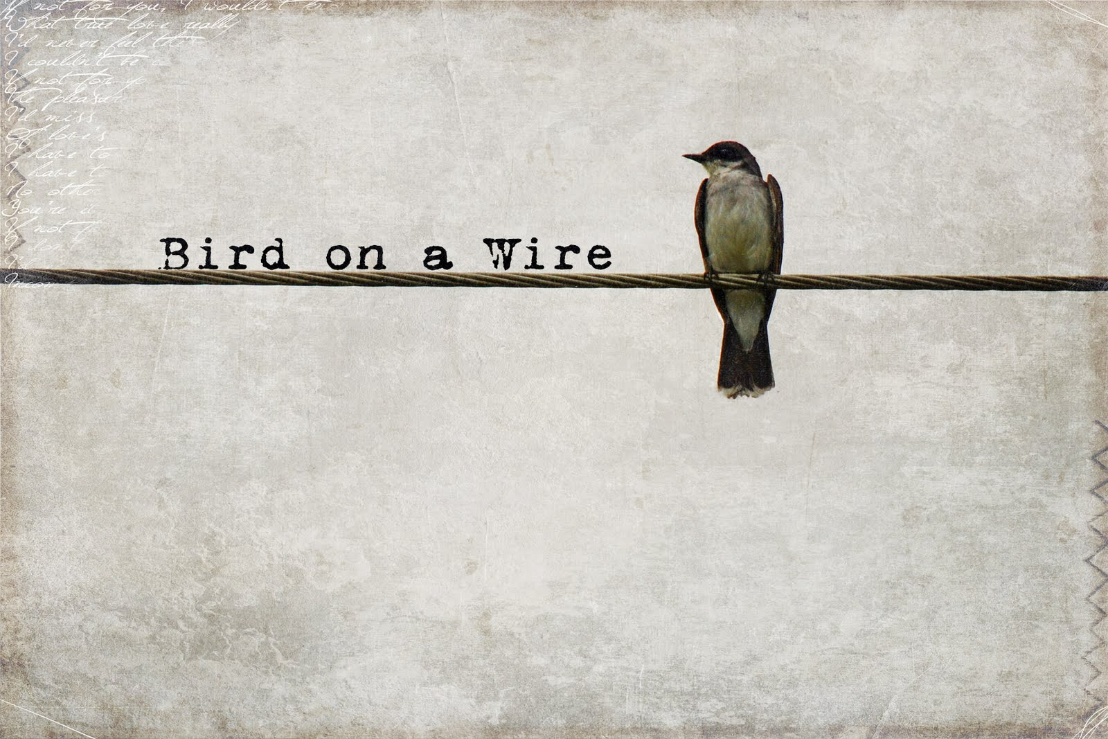 Bird on a wire template - photo#11