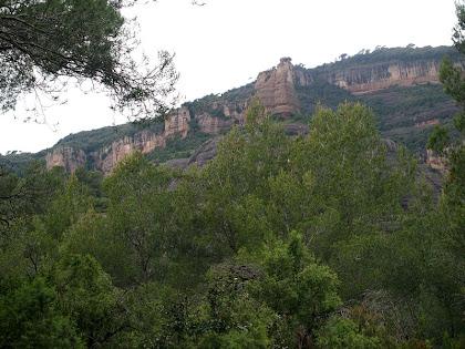 La Castellassa de Can Torras entre els pins blancs