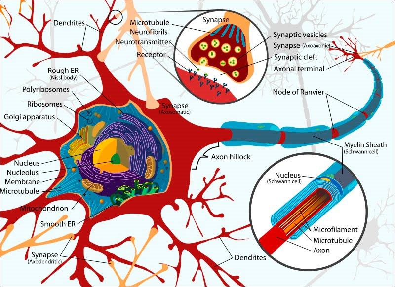 Resultado de imagen de Nuestro cerebro genera pensamientos