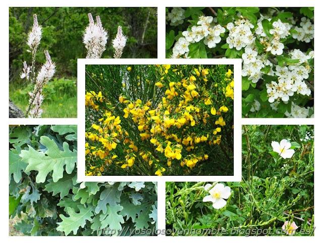 florecillas del campo