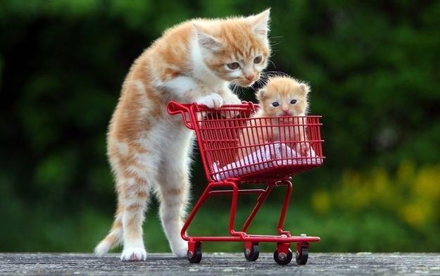 Shopping cart cat