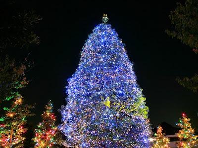 http://3.bp.blogspot.com/-D8zrSD04nMo/Tlf_iaAaDLI/AAAAAAAAAbo/Ef9kqMG0dJM/s400/christmas-tree-beautiful-blue.jpg