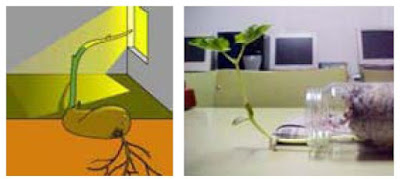 Pengertian dan Contoh Macam-macam Gerak pada Tumbuhan Lengkap