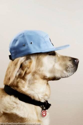 Dog fan of baseball