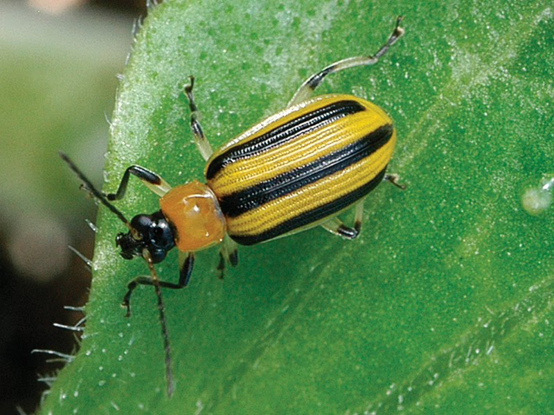 Daily Harvest Farm: The good and bad of garden bugs
