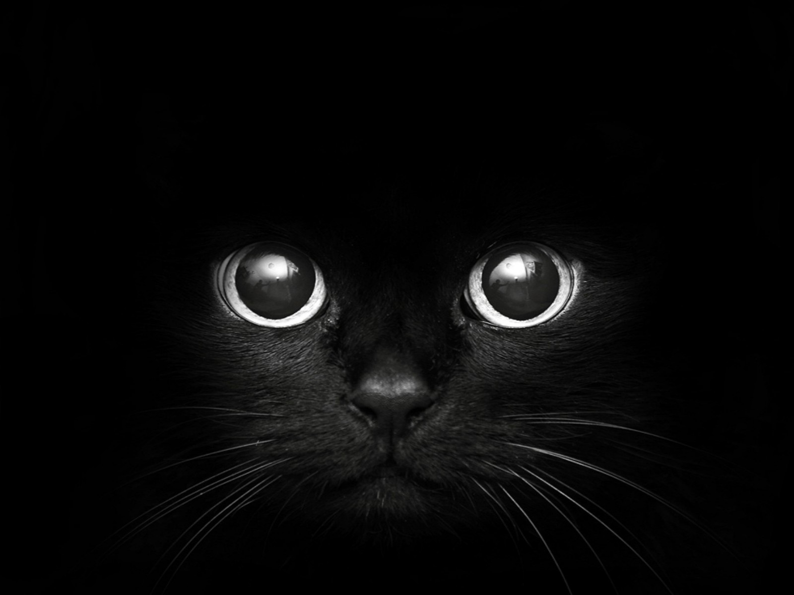 Peticular Fashions: Black cats at Halloween. Are they really in ...
