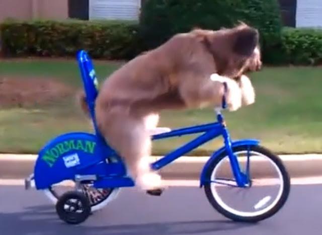 dog rides