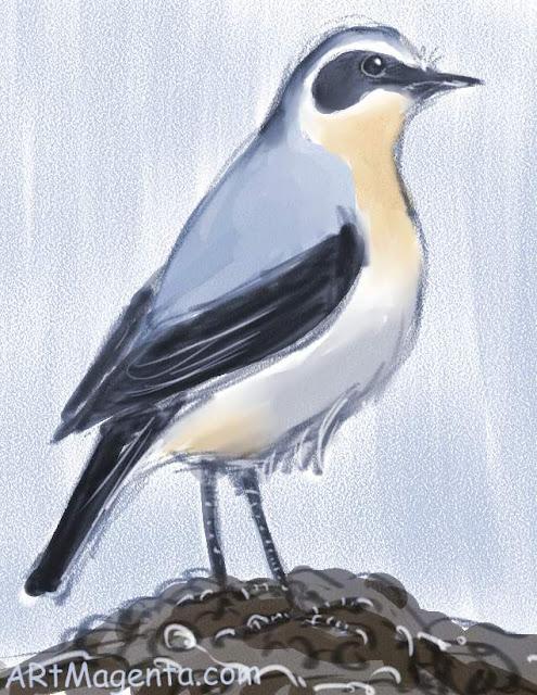 En  fågelmålning av en Stenskvätta från Artmagentas svenska galleri om fåglar.