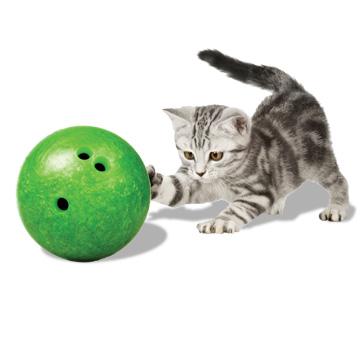 boling kucing