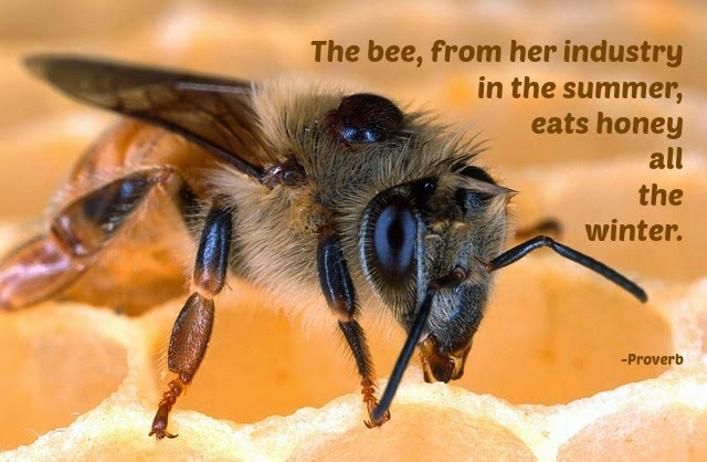 quotes about honey bees