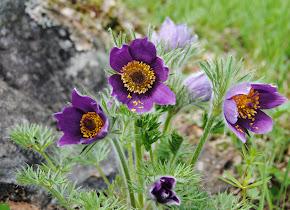 Läs min tredje artikel om Naturträdgård på Odla.nu