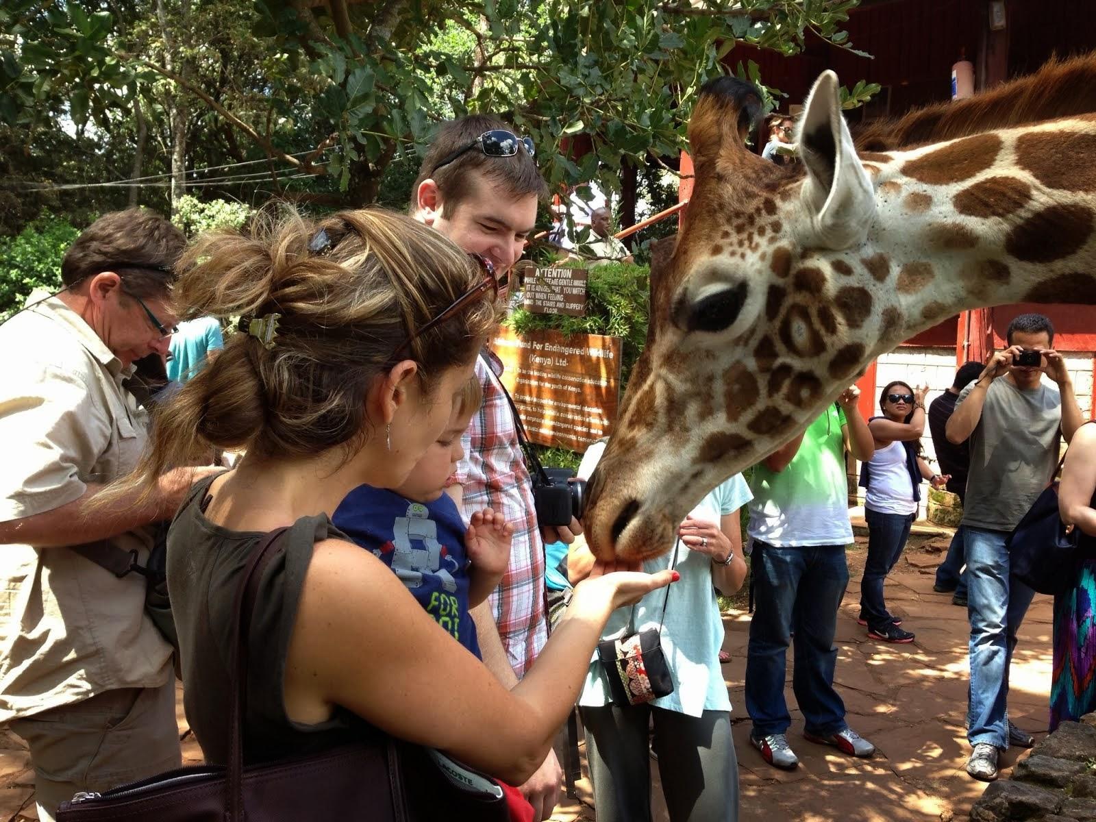 Visit to Giraffe Center