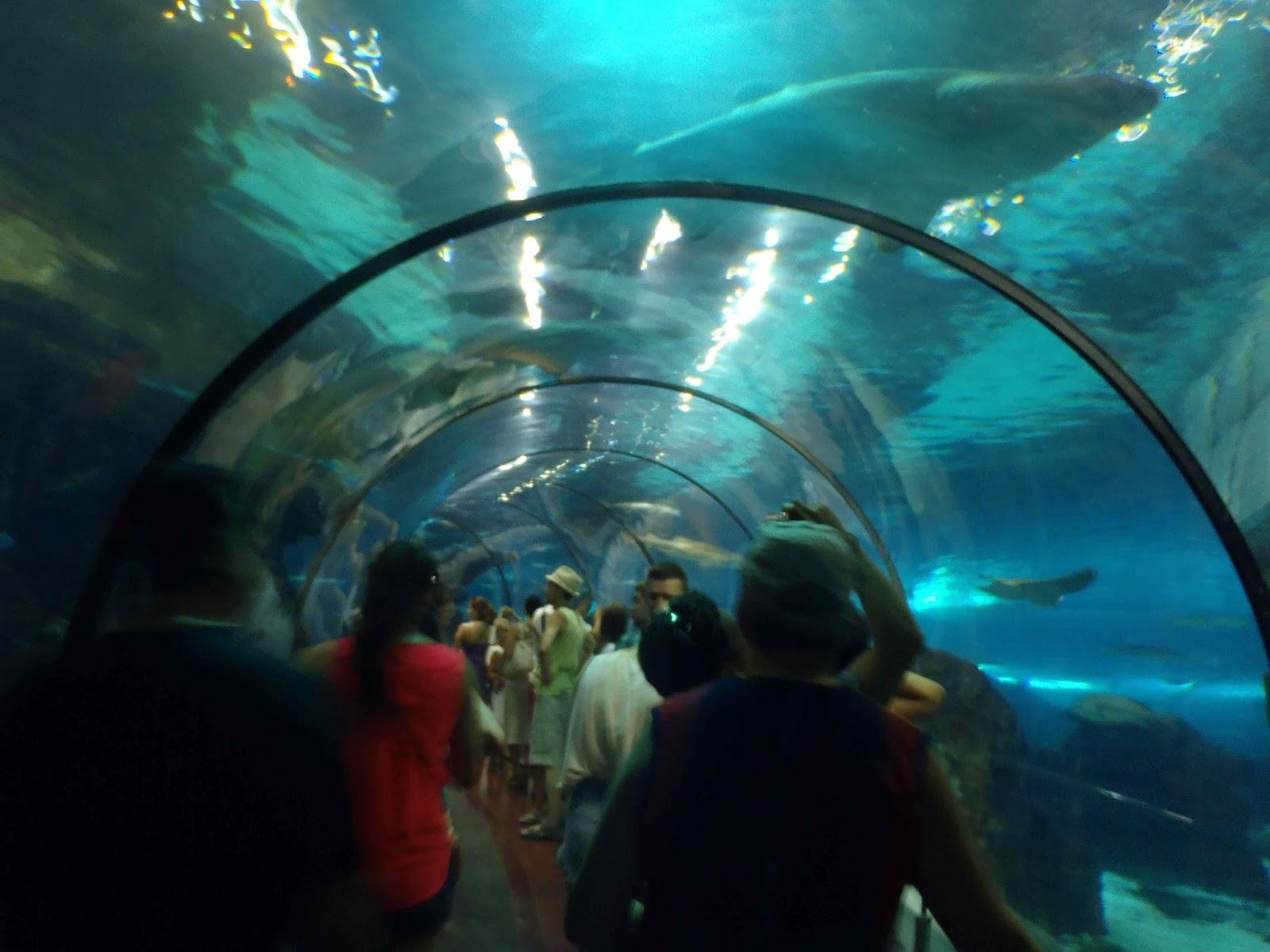 La vie est belle pyr n es et barcelone 2013 aquarium et for Aquarium exterieur