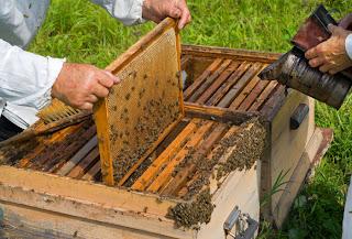 εξαφάνιση των μελισσών