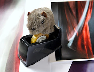 wombat BIFB '13