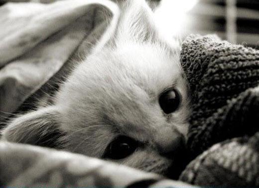 Resultado de imagem para gatos e o frio