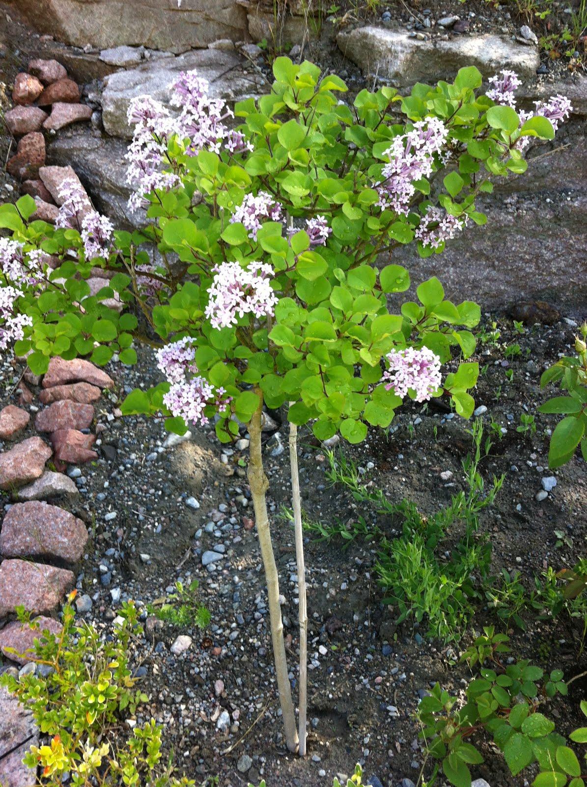 Den som planter en hage planter lykke - kinesisk ordspråk