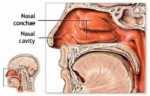 using your nasal cavity in singing ~ singing in chorus, Human Body