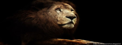 Couverture facebook originale lion