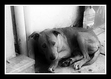 Adopciones y acogidas de perros abandonados