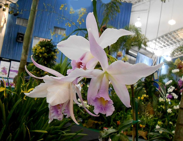 My Virtual Garden 2 Orchid Show