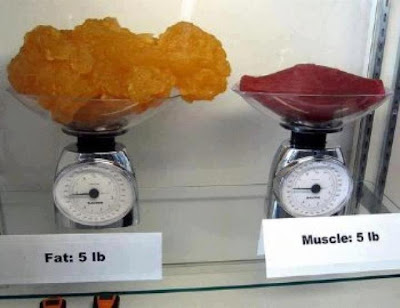 muscle vs fat, muscle and fat, weigh muscle, weigh fat, muscle, fat