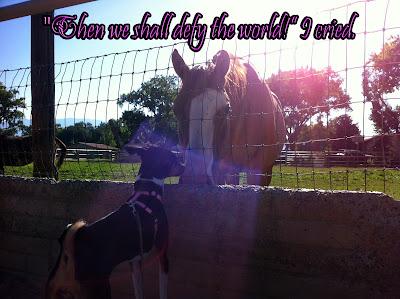 Nailah the basenji rescue dog - BRaT Blog post
