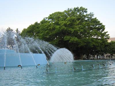 噴水とケヤキの木