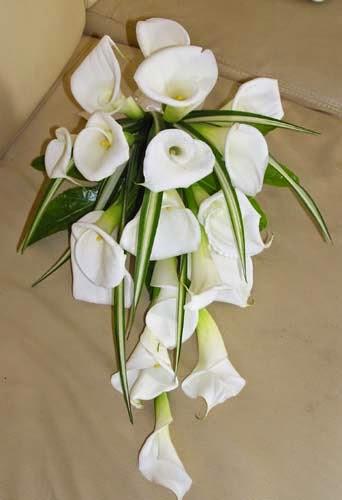Bouquet e addobbi la guida al significato dei fiori for Calle colorate non fioriscono