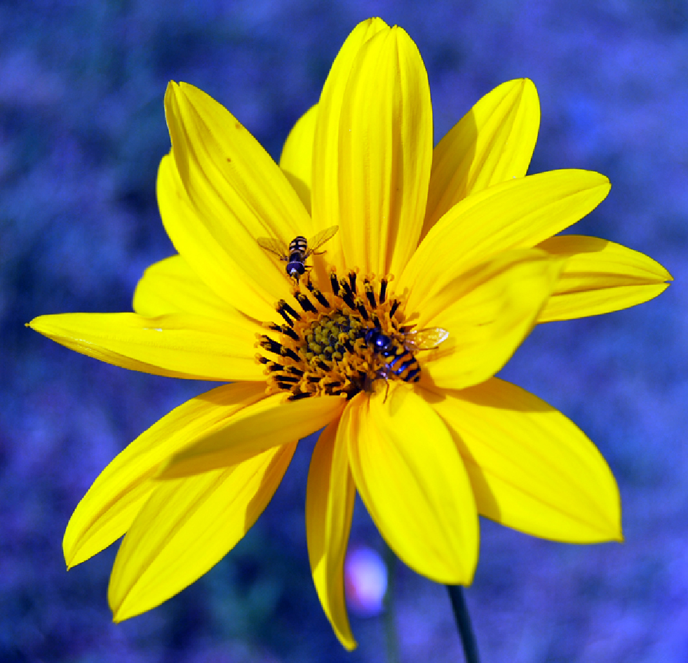 Fotos de flores flores silvestres variadas - Tipos de flores silvestres ...