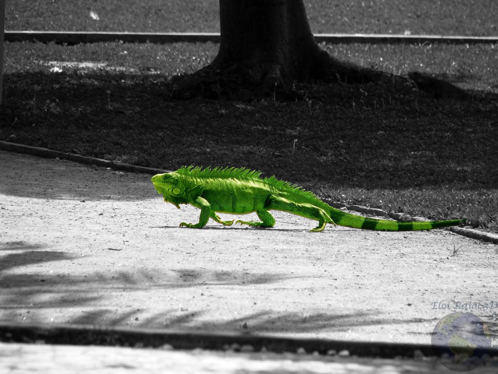 Efeitos PhotoScape (Foto preto e branco com detalhes coloridos )