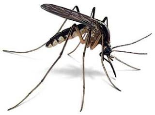 Como poder eliminar los mosquitos