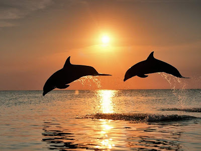 3d sunset wallpapers with dolphins