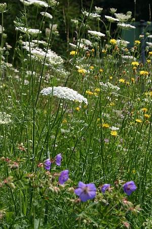 Wildblumen-Fotosafari