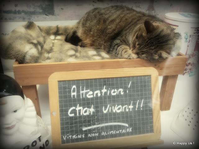 Attention, chat vivant!