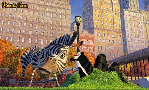 Cuộc Phiêu Lưu Tới Madagascar 1349543451