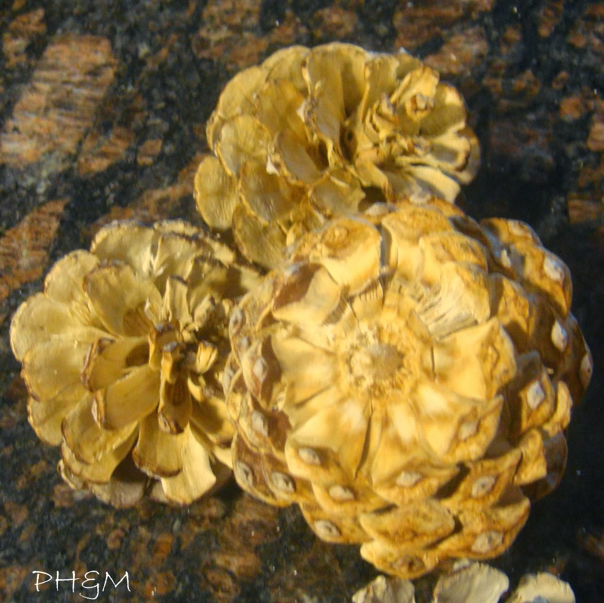 http://plumperfectandme.blogspot.com/2013/10/bleached-pine-cones-decor.html
