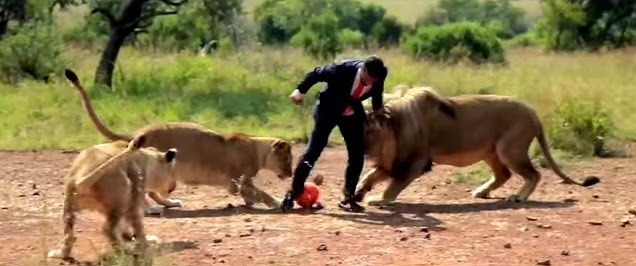 Un hombre juega al fútbol con leones
