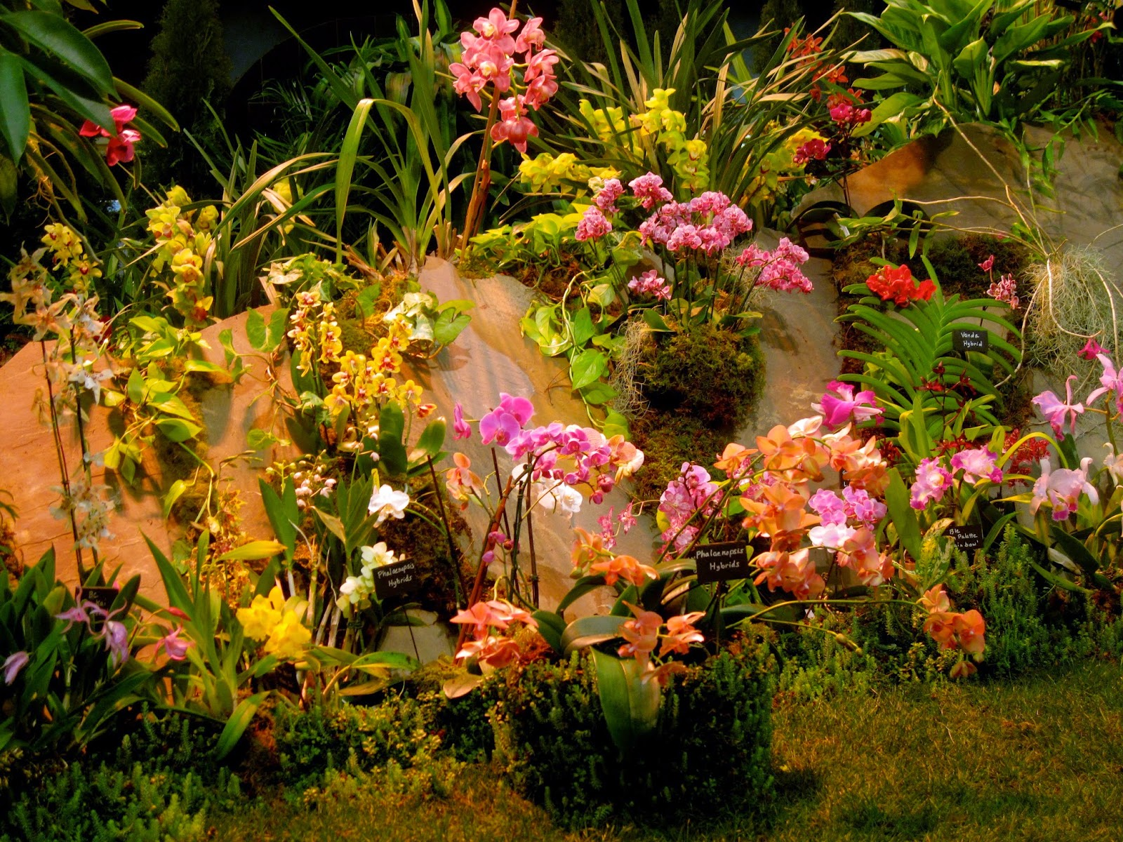 Bonney Lassie: A Longer Look at The NWFGS Display Gardens