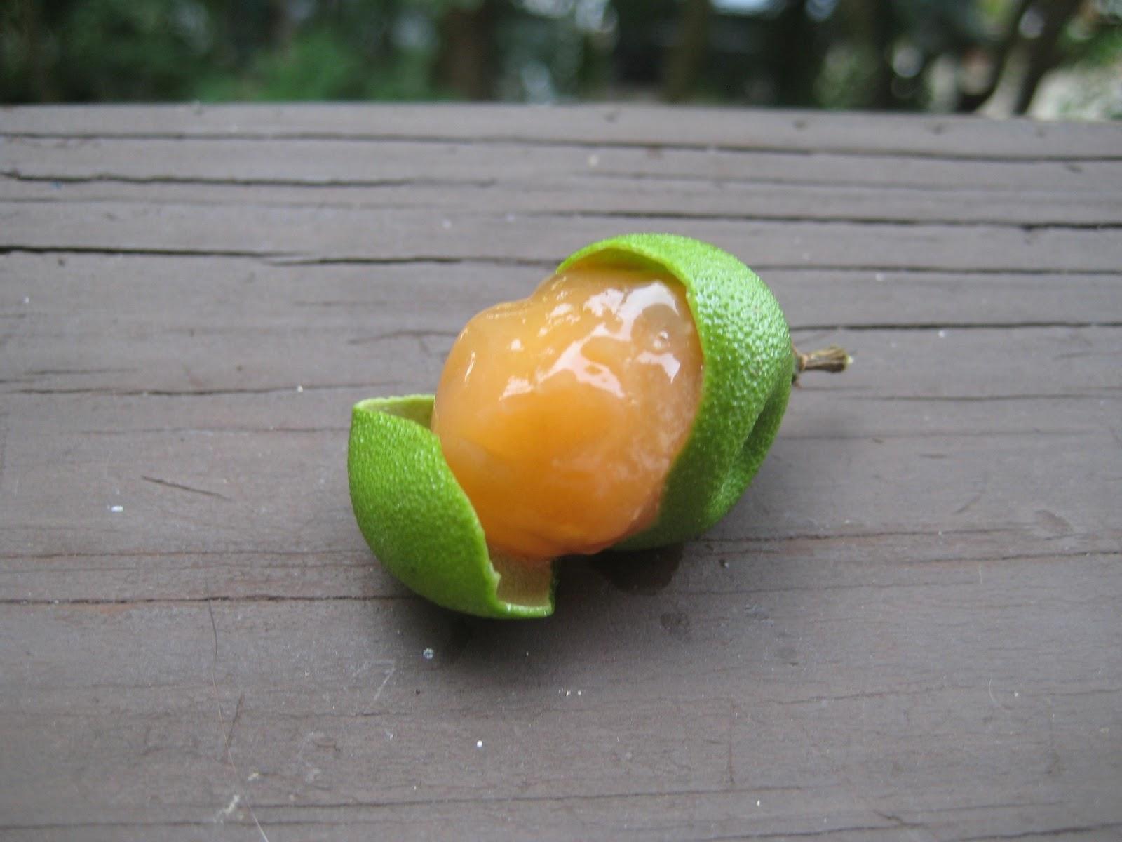 Fruit link 3 - Fruit Link Deluxe