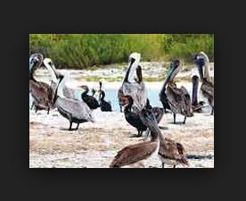 धर्म में पक्षियों का महत्तव